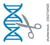 dna gene   genome editing with... | Shutterstock .eps vector #1562710420
