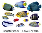 Set Of Saltwater Angelfish On...