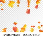 maple leaves vector  autumn... | Shutterstock .eps vector #1563271210