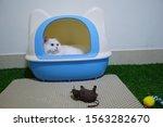 White Cat Sitting In A Litter...