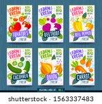 abstract splash food label... | Shutterstock .eps vector #1563337483