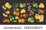 Citrus Colorful Hand Drawn...