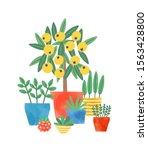 Home Plants In Ceramic Pots...