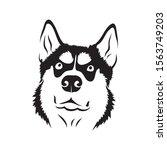 Siberian Husky Dog   Isolated...