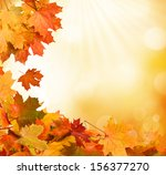 autumn leaves  | Shutterstock . vector #156377270