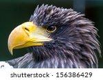 steller's sea eagle closeup... | Shutterstock . vector #156386429