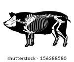 pig skeleton   Shutterstock .eps vector #156388580