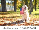 Cute Dog With National Flag Of...