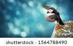 Atlantic Puffins Bird Or Commo...
