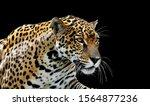Beautiful Leopard Portrait ...