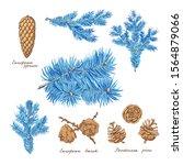 Ponderosa Pine  European Larch...