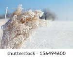 Hoarfrost On Dry Grass In...