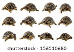 Stock photo collection of turtles close up isolated on white background 156510680