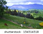 alpacas on the farm in... | Shutterstock . vector #156516518