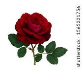 Dark Red Rose With Green Leave...