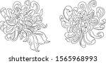 chrysanthemum flower vector for ...