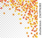 maple leaves vector  autumn... | Shutterstock .eps vector #1565996383