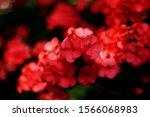 Close Up Beautiful Blossom...