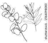 vector eucalyptus leaves branch.... | Shutterstock .eps vector #1566098083