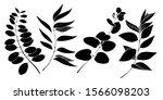 vector eucalyptus leaves branch.... | Shutterstock .eps vector #1566098203