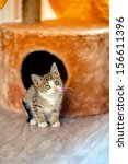 Stock photo the kitten came out of the house and he was scared age month 156611396