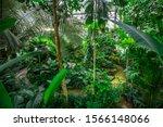 Queen Sirikit Botanical Garden  ...