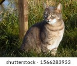 Tabby Cat Sitting In Grass With ...