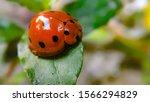Stock Photo   Macro Of Bug...
