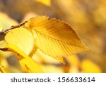 Beautiful Autumn Macro Yellow...