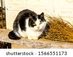 Small photo of Cat grouse sits on a bench near a broom and take heart