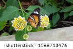 Coloured Butterfly On Some...