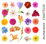Stock photo mix flowers isolated on white background 156675110