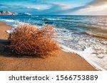 Dry Tumbleweed On The Sea Beac...