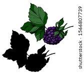 blackberry healthy food. black...   Shutterstock .eps vector #1566807739