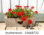 Geraniums In Planter With A...