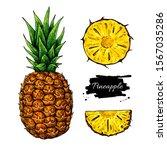 pineapple vector drawing.... | Shutterstock .eps vector #1567035286