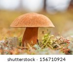 Edible Fungi A Mossiness...