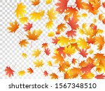 maple leaves vector  autumn... | Shutterstock .eps vector #1567348510