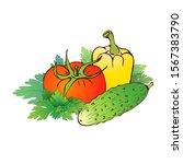 vector hand drawn realistic... | Shutterstock .eps vector #1567383790