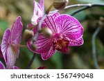 blooming purple orchid          ... | Shutterstock . vector #156749048