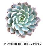 Green Succulent Cactus Flower...