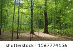 Summer in the Forrest Sommer im Wald