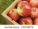 Box Of Harvested Apples On Grass