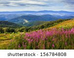purple flowers on a hillside in the mountain landscape - stock photo