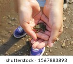 The child holds a small frog in his hands. Close-up. Top view. Background.