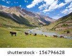 herd of horses pasturing in... | Shutterstock . vector #156796628