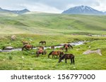 herd of horses with colts... | Shutterstock . vector #156797000