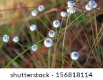 Grass Flowers Along The Way