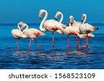 Wild African Birds. Group Of...