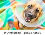 Happy Young Dog With Veterinary ...